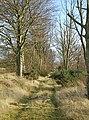 Waterless Wood - geograph.org.uk - 669224.jpg