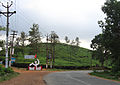 Wayanad - Parisons Estate, Thalapuzha.jpg
