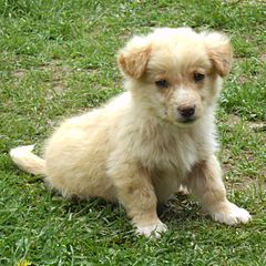 Image Result For Small Hypoallergenic Dogs