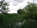 West Field, Humbleton - geograph.org.uk - 448258.jpg