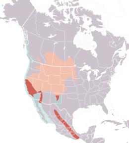 Western grebe range