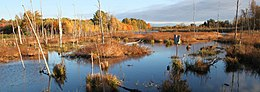 Wetland at Missisquoi National Wildlife Refuge.jpg