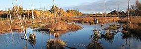 Wetland at Missisquoi National Wildlife Refuge.jpg