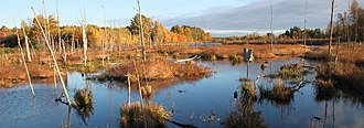 Missisquoi National Wildlife Refuge - Image: Wetland at Missisquoi National Wildlife Refuge