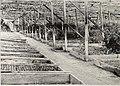 Wholesale price list spring of 1918 - for nurserymen only (1918) (14780547991).jpg