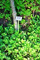 Wikipedia 13. Fotoworkshop Botanischer Garten Erlangen 2013 by-RaBoe 071.jpg
