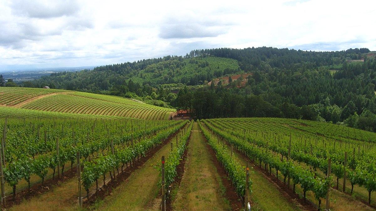Wine Tours Northwest Portland