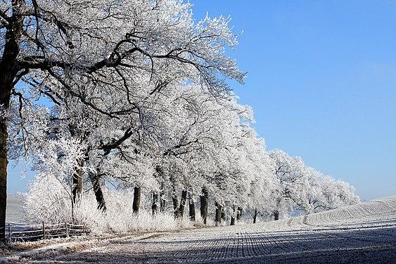 Frost in Freiburg