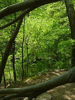 Wissahickon near Cresheim Creek.jpg