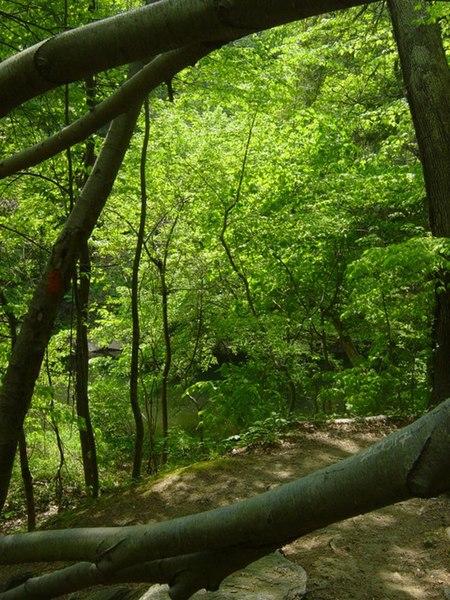 File:Wissahickon near Cresheim Creek.jpg