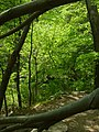 Wissahickon near Cresheim Creek.jpg
