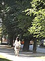 Woman riding bicycle in Milan, Italy (9471514273).jpg