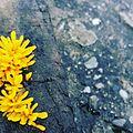 Wood Lichen.jpg