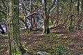 Woodland (8049404704) (2).jpg