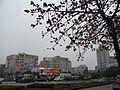 Xinhui 新會 Gangzhou Dadaozhong 岡州大道中 cotton tree April-2012.JPG