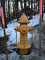 Yellow Hydrant.jpg
