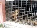 Yerevan Zoo 09.jpg