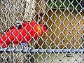 ZOO, papoušek.jpg