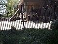 Zebra bioparco.jpg