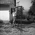 """""""Gruštarca"""" (ročna žaga), Veliki Ban 11, pri Zavrlčanu 1952.jpg"""