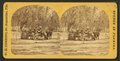 'All ready to start.', from Robert N. Dennis collection of stereoscopic views.png