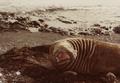 (Jubany) Recuento de mamíferos (14).png