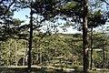 Đương lên đồi Mimosa thung lũng tình yêu - panoramio.jpg