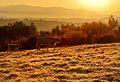 Žiarovky - panoramio.jpg