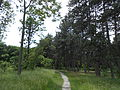 Ботанічний сад ДНУ 7.JPG