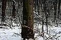 Голосіївський ліс DSC 0115.jpg
