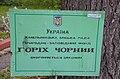 Горіх чорний у Хмельницькому по вулиці Пилипчука.jpg