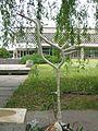 Донецкий ботанический сад 035.jpg