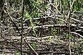 Змієві вали Бурелом DSC 0622.jpg