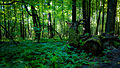 Измайлово, лес.jpg
