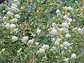 Мноштво од треви и бои на растенија во околината на Матка.JPG