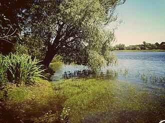 Danilovsky District, Volgograd Oblast - Lake Ilmen in Danilovsky District