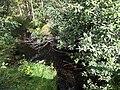 Павручей (ручей, впадает в Белое море) 2.jpg