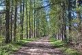 Парк лиственничная аллея лето Волышово.JPG