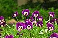 Улыбающиееся цветочки (59918260).jpeg