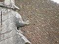 Химера церкви сен-Пьер в Шартре - panoramio (1).jpg