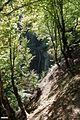 آبشار جنگل ابر - panoramio.jpg
