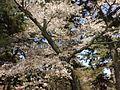 京都御所 - panoramio.jpg