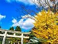 千秋公園の紅葉02.jpg