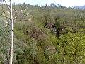 山上的树 - panoramio.jpg