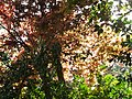 次男花園 Cinan Garden - panoramio.jpg