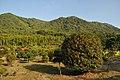 湯野地区山林 - panoramio.jpg