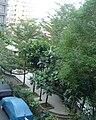 畸零的瓦磘里休閒廣場藉由大樹增加空間感20100129.JPG