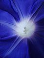蒼 Blue (8383429183).jpg