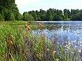 0027. Парголово. Финское озеро.jpg