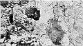 01563 Grand Canyon Historic Bright Angel Trail (7421218884).jpg